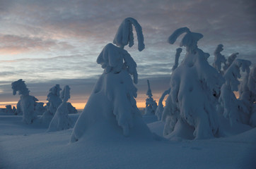 Trees covered with snow are seen ater sunset at the mountain resort in Szczyrk