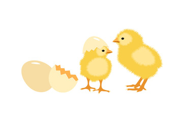 Chicks newly hatched out from eggs. Vector illustration