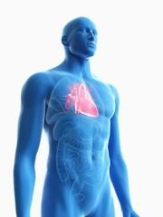 Illustration of a man's heart