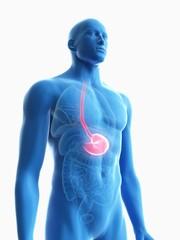 Illustration of a man's stomach