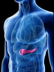 Illustration of a man's pancreas