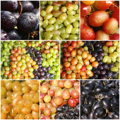 Set with different kinds of grapes as background