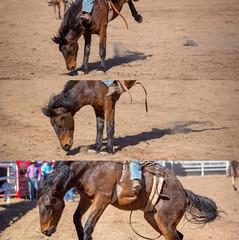 Cowboy Riding Bareback Bucking Bronco Collage
