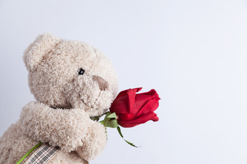 Teddy Bear holding a red rose in front of a white wall.