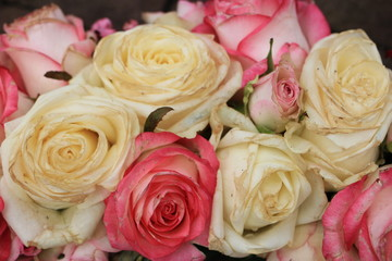 Mixed pink and white roses