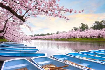 Full bloom Sakura - Cherry Blossom  at Hirosaki park in Japan Wall mural