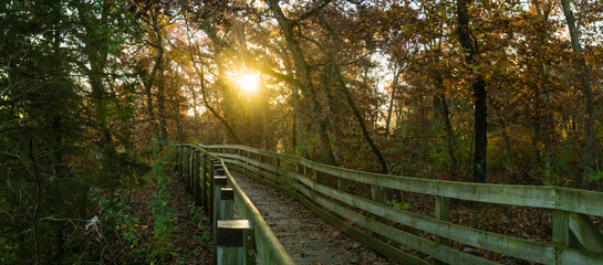 Wooden pathway through the woods on a Autumn sunrise.  Starved Rock State Park, Illinois, USA.
