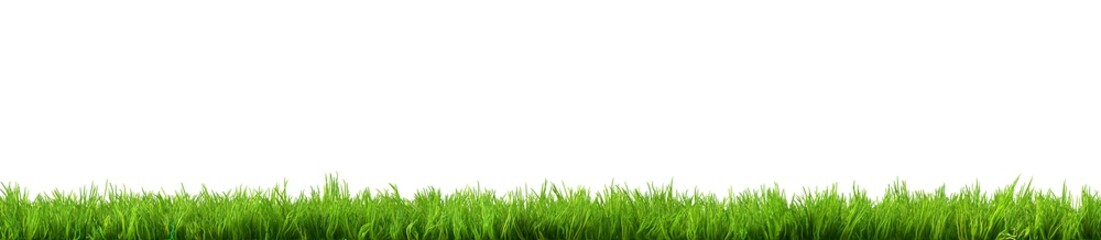Photo sur Aluminium Herbe grass isolated on white background
