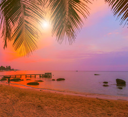 sunrise Palm beach palm trees at sunset