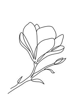 Magnolia flower hand drawn art