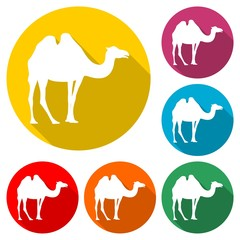 Camel icon silhouette logo, color set with long shadow