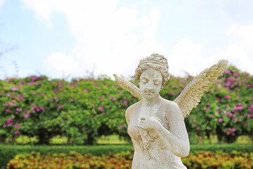 A beautiful angel statue in the garden.