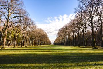 Grüne Wiese mit Baumreihen