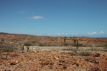 Paesaggio desertico con piante di cactus attraversato da strada, Aruba, mar dei Caraibi