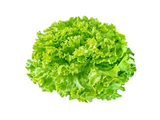 Batavia lettuce salad rosette