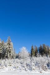 Schneebedeckte winterlandschaft. Snow-covered landscape.