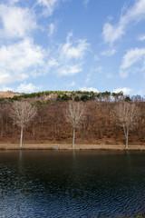 Three trees at waterside in autumn. Drei Bäume im Herbst am Ufer.