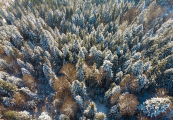 aerial view of winter forest in nature