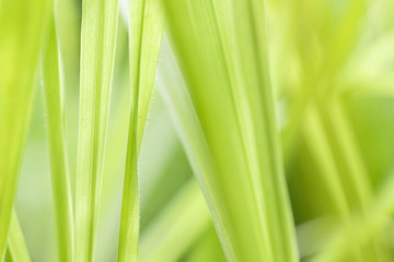 Closeup of nature leaves green blur. In the spring Under the morning light. Use as background and wallpapers.