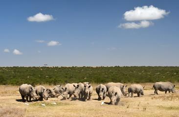 Nashorngruppe in Kenia