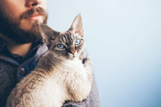 Close up of a pretty blue eyed cat sitting on beard mans hands. The Devon Rex feline with the owner.  Copy-space area