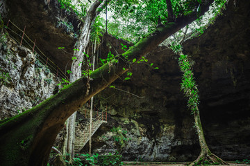 Nature and trees from inside of nature cenote in Yucatan village in Mexico