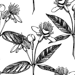 Collection of feijoa fruit, flower, leaves and feijoa slice. Graphic hand drawn illustration.
