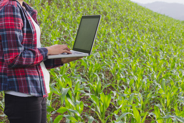 Agronomist analyzing cereals with laptop computer.