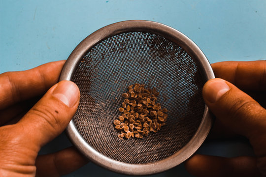 Tomato seeds in a sieve