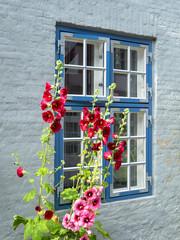 Stockmalven vor Sprossenfenster