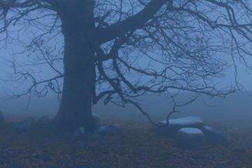 night under oak