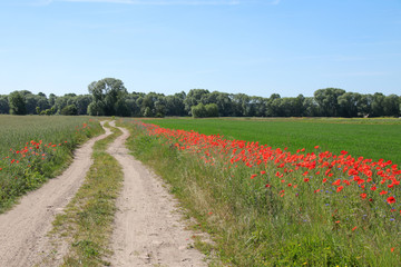 Hiking in the federal state of Brandenburg, hiking trail with poppies, German countryside
