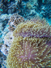 colorful coral reef in thailand