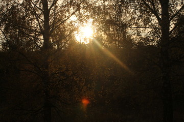 rays of sun in the forest