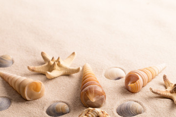 star fish and sea shells on beach sand with copy space