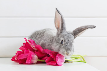 Bunnyes and pink tulips on white background