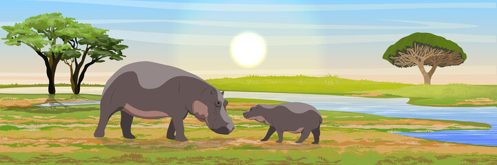 Hippos mother and cub in the African savanna near the river. Wild animals of southern Africa. Realistic vector landscape. The nature of Africa. Reserves and national parks.