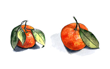Mandarin with leaves on a white background. Drawing markers