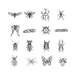 곤충 일러스트 / 손으로 그린 곤충 스케치