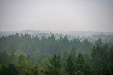 misty forest in foggy morning. far horizon