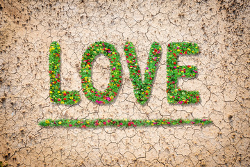 Love text with common zinnia beautifully with green leaves growing on brown dry soil or cracked ground texture background.Love concept