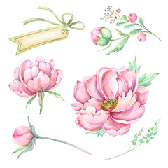 Set of watercolor pink flowers and buds. peony, banner, bow