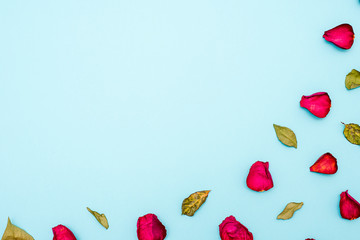 Background of maroon rose petals and green leaves on blue background. The view from the top. Blank for greetings, greeting cards