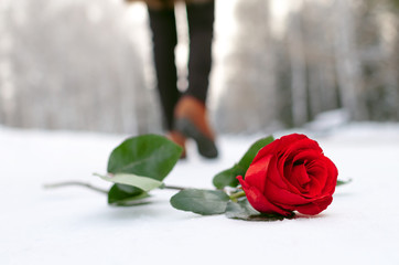 Red rose flower laying on the snow covered road in a winter park and walking away woman silhouette. Failed date or broken heart concept.