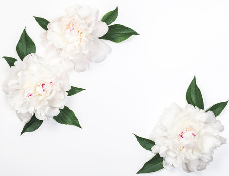 Frame of three white peony flowers and leaves on white background. Top view with copy space. Flat lay.
