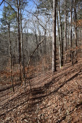 Woodland hiking trail in Big Hill Pond State Park Tennessee