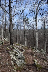 Big Hill Pond State Park hiking trail in Tennessee