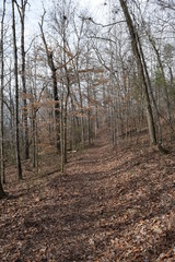 Hiking Trail in Big Hill Pond State Park Tennessee