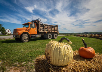 pumpkins and squashes on the farm