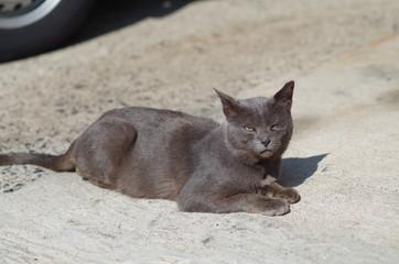 ひなたぼっこする黒猫